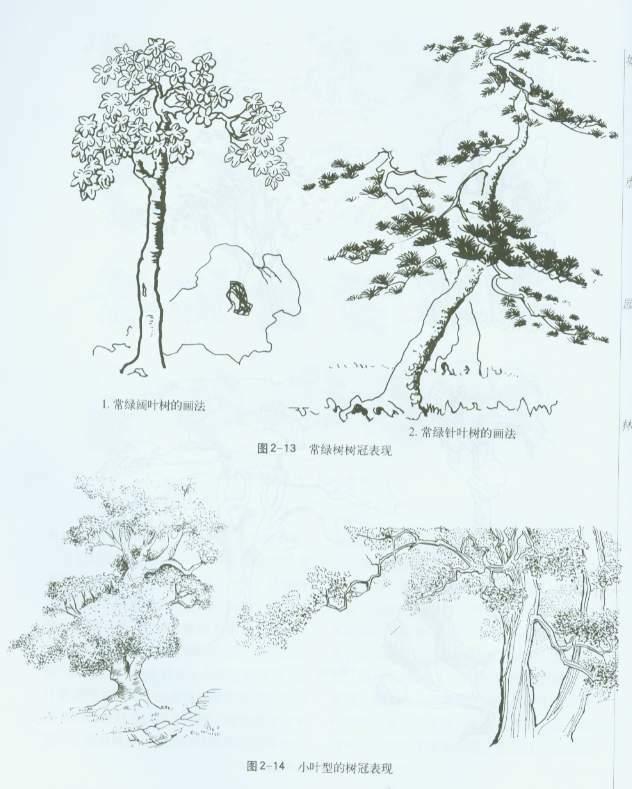 园林cad树木植物平面素材图 4-园林树木立面图-组合树 室外园林树木及