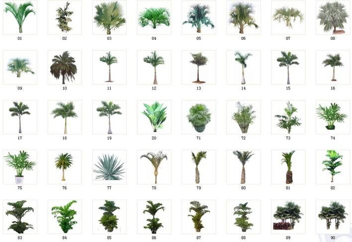 植物素材29-30棕树素材 029 a41