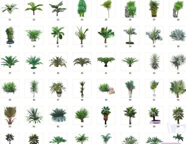 植物素材,ps贴图,3d贴图,共有棕榈,剑兰类植物69种,清晰,漂亮