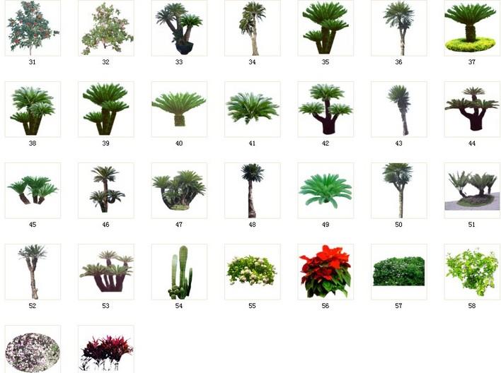 cad园林植物素材