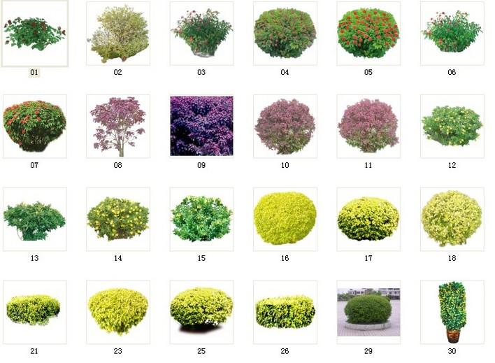 植物素材,ps贴图,3d贴图,小灌木贴图,比较漂亮,象素高,很清晰