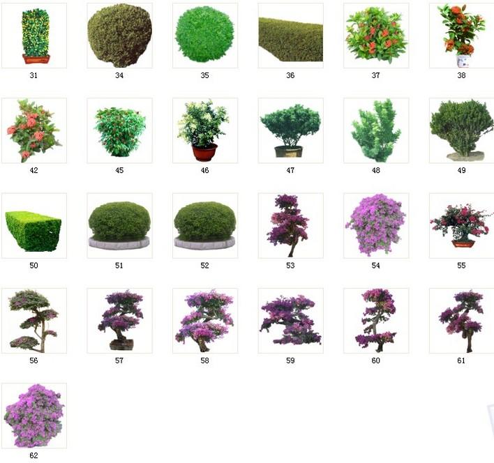 图纸 园林设计图 植物素材35灌木素材 035 c31-62