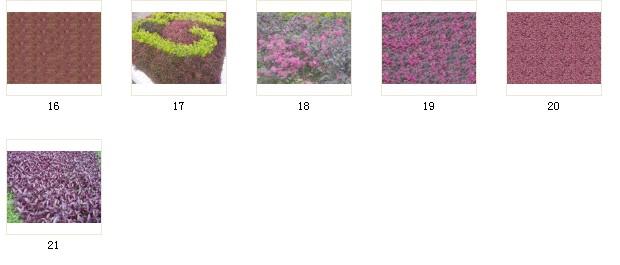 植物素材37植被 037 b16-21