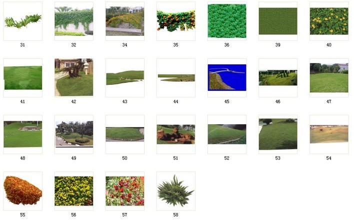 植物素材38植被素材 038 c31-58