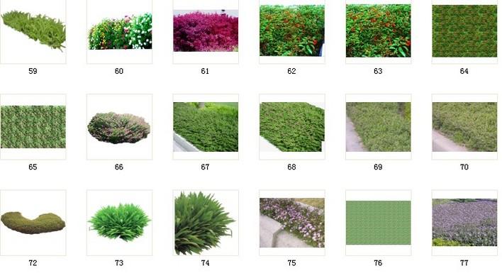 植物素材38植被素材 038 c59-77