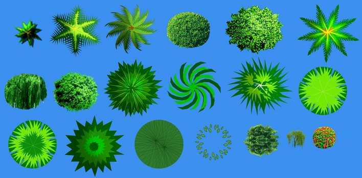 绿篱植物矢量图