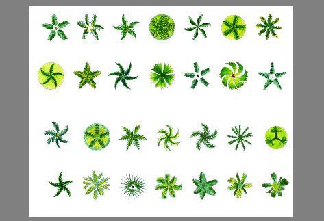 乔木平面植物素材ps格式
