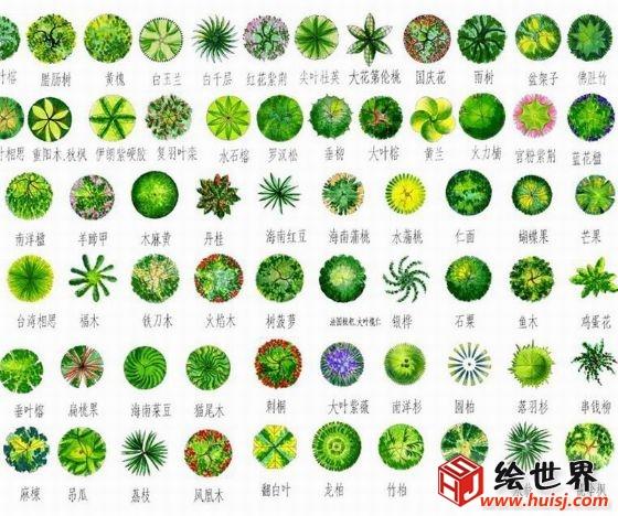 植物彩色平面图 植物cad平面图
