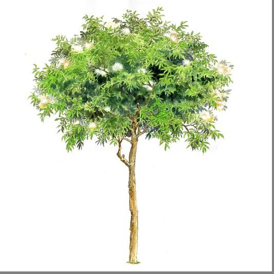 ps手绘树木素材