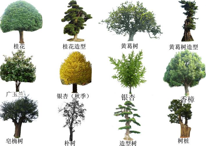 景观植物配置图片手绘景观植物配置图景观植物配置分析图; 小区景观