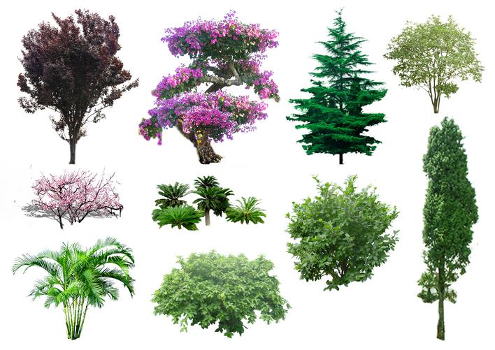 ps树木素材