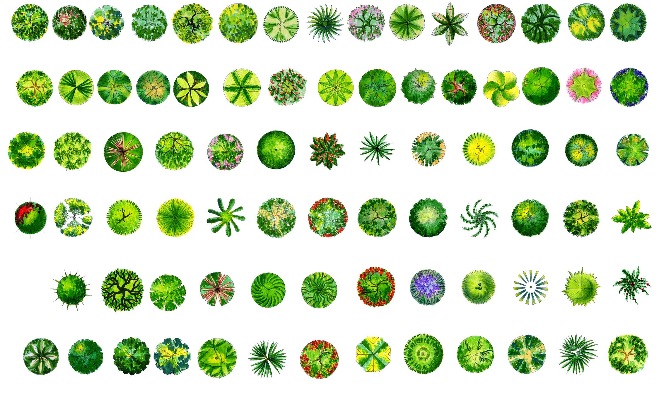 园林植物平面图例大全bysangge f:ps植物平面图块植物图例 ps植物平