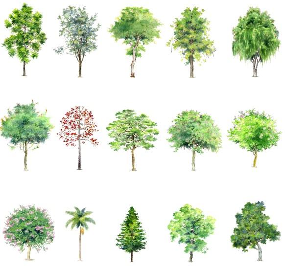 手绘园林植物素材