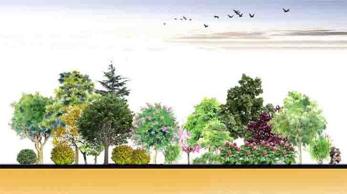 植物配置立面效果图.jpg