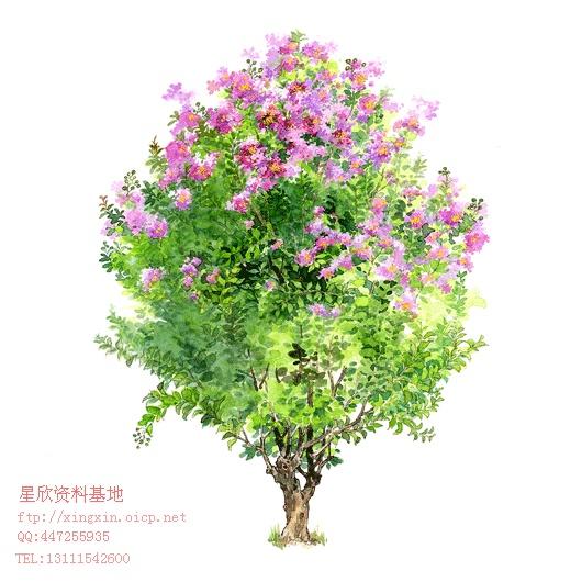灌木ps彩色平面图例 ps的植物平面图例 最全的南方北方的平面立面植物