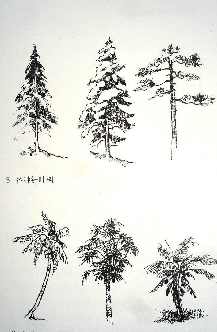 立面,平面植株线稿 中科院华南植物园城市景观生态园(投标稿) 中科院