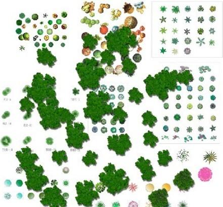 园林植物平面素材彩图1