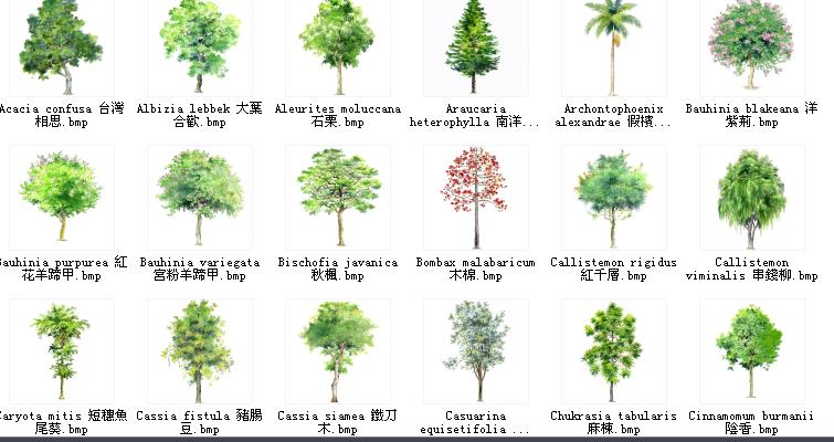 百种园林植物立面图例--手绘版