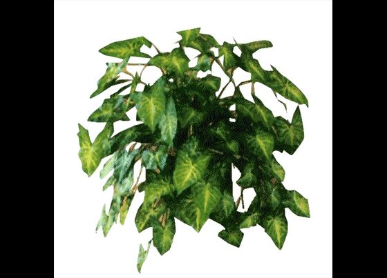 室内植物平面素材集(一)