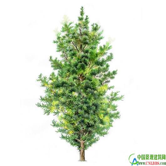 经典手绘立面树