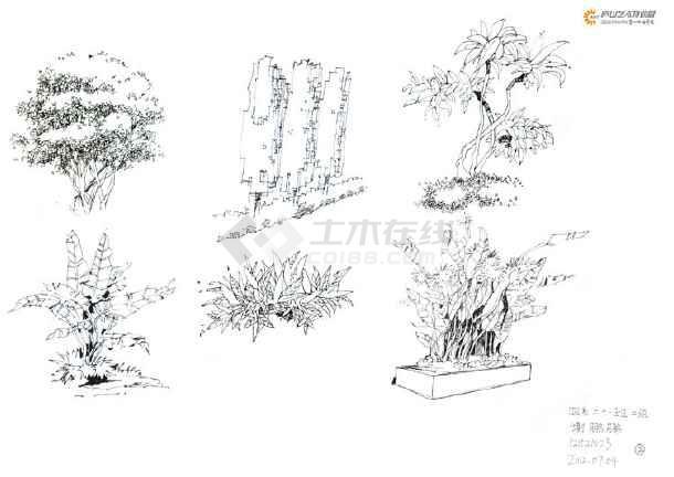 多张植物手绘线稿jpg图纸,该设计手绘植物立面图,具有一定的参考价值
