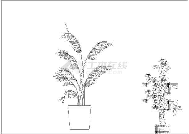 园林植物立面图
