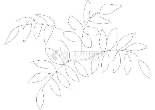 植物立面cad图