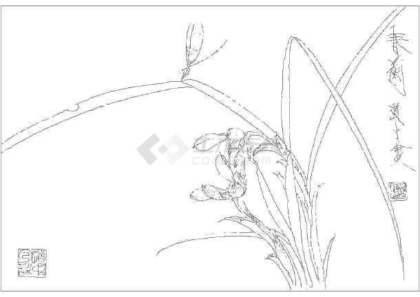 园林手绘线稿花卉