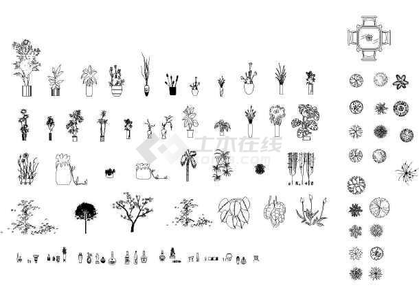 很好用绘图的素材- cad植物立面图例大全(地被,乔灌木)立面图例彩色