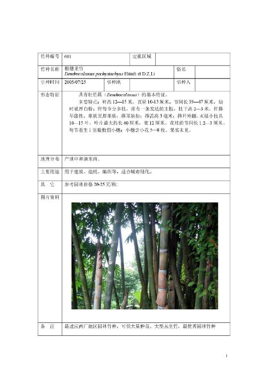 粗穗龙竹:具有牡竹属(dendrocalamus)的基本特征