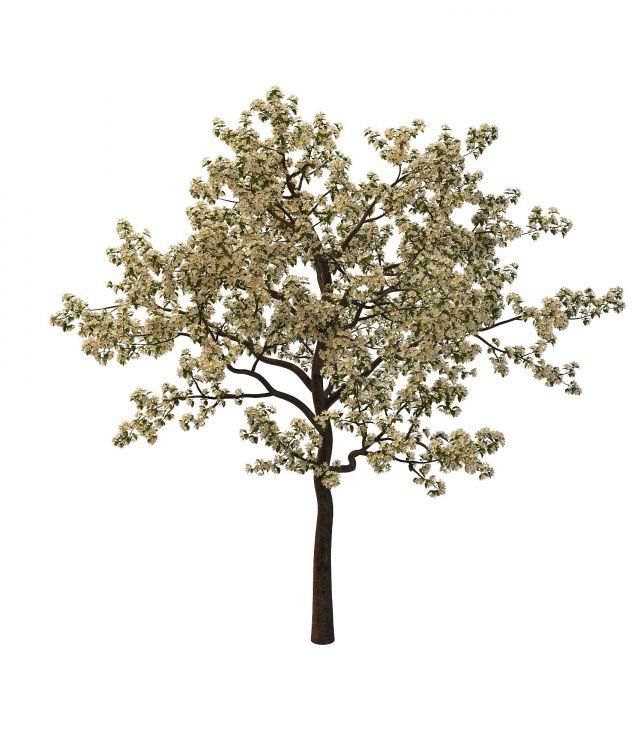 樱桃树3d模型下载