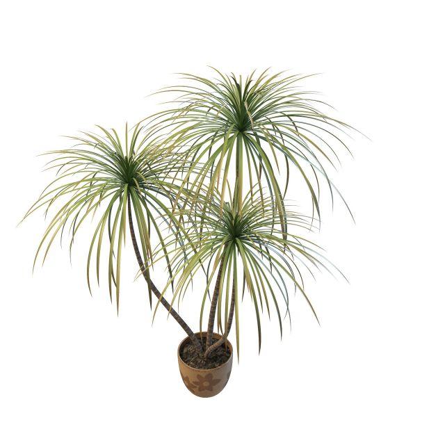 棕榈树盆栽3d模型下载简介
