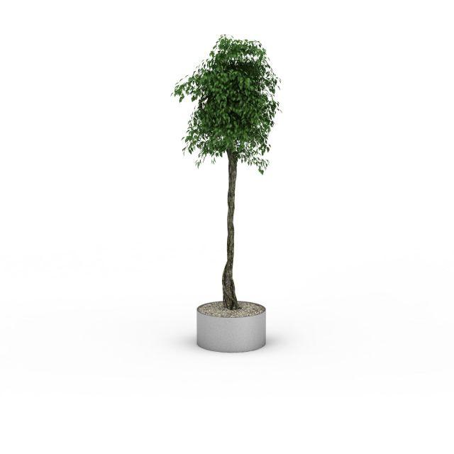 景观植物3D模型下载-图2