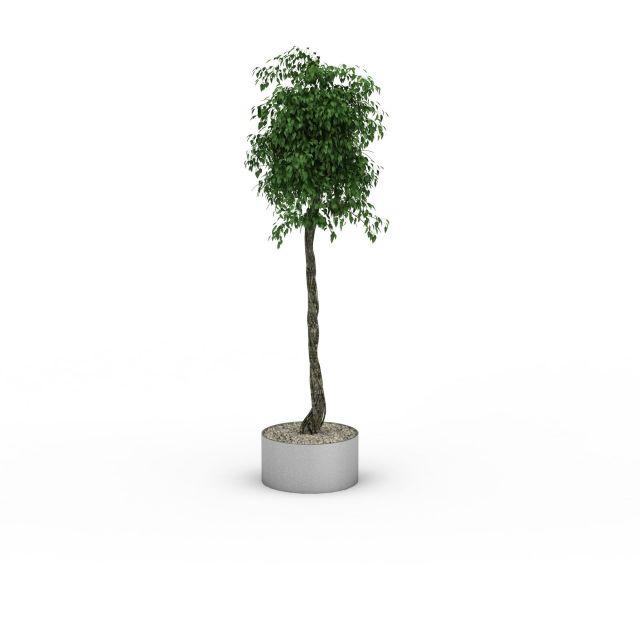 景观植物3D模型下载-图3