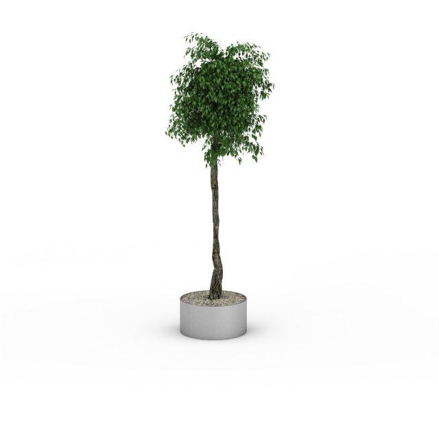 景观植物3D模型下载-图1