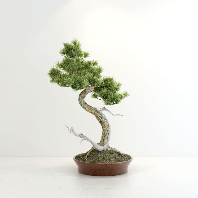 创意松树盆景3d模型下载