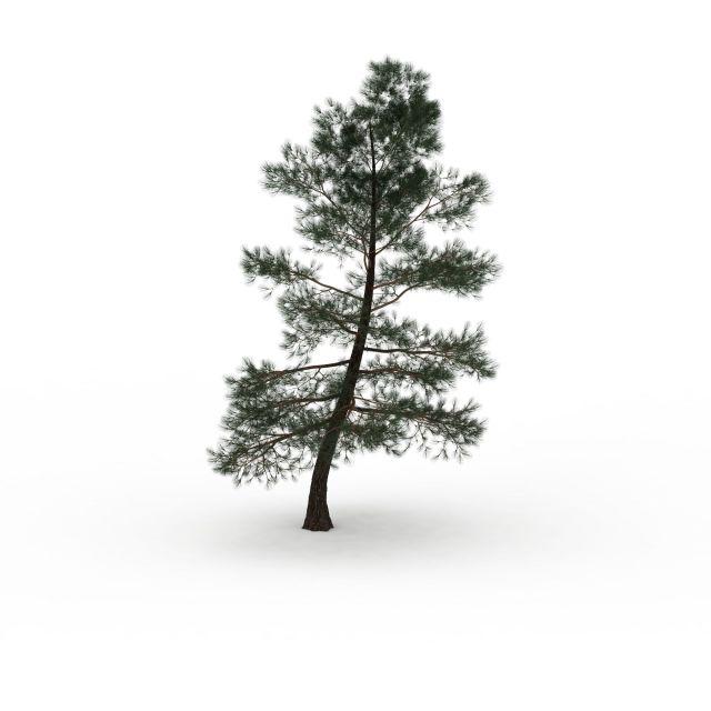 山坡柏树植物3d模型下载-图2