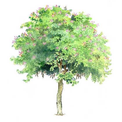简介:百种景观植物手绘表现,基本上涵盖了所有景观使用的乔木
