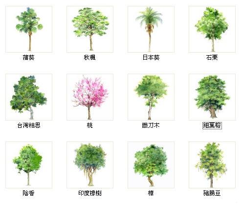 收藏此文档 简介:彩绘树木,配有繁体学名,风格清新典雅,是园林手绘初