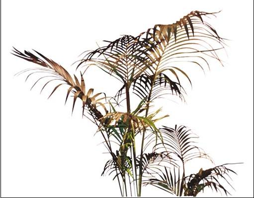 photoshop室内外植物素材