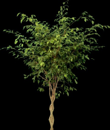 软件 园林 软件教学 ps教程 高清晰植物素材  上传时间:2007-11-30 所